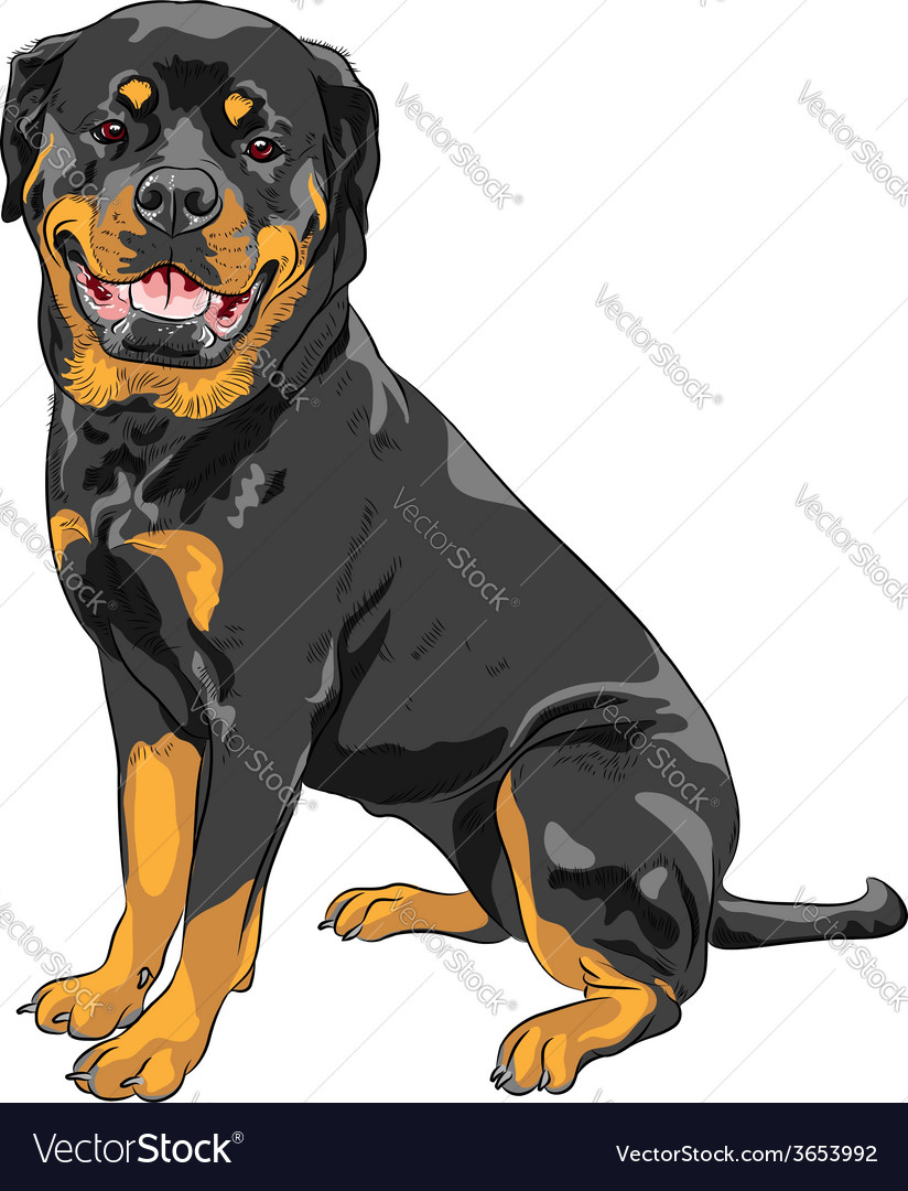 Dog rottweiler breed vector | Price: 1 Credit (USD $1)