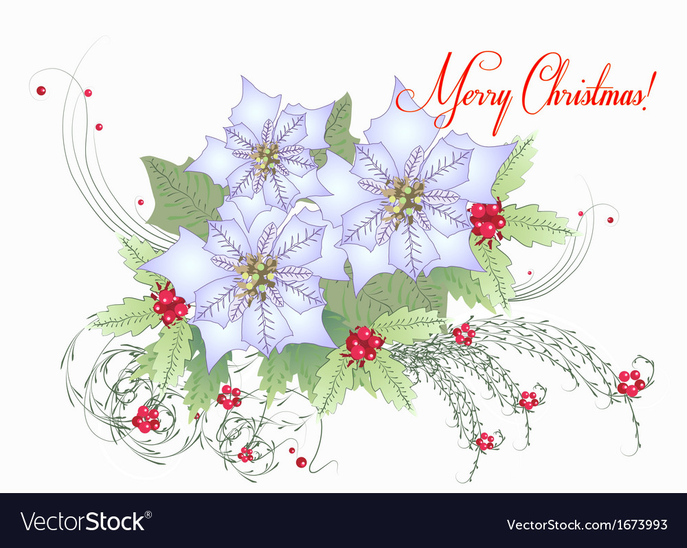 Card with white poinsettia vector | Price: 1 Credit (USD $1)