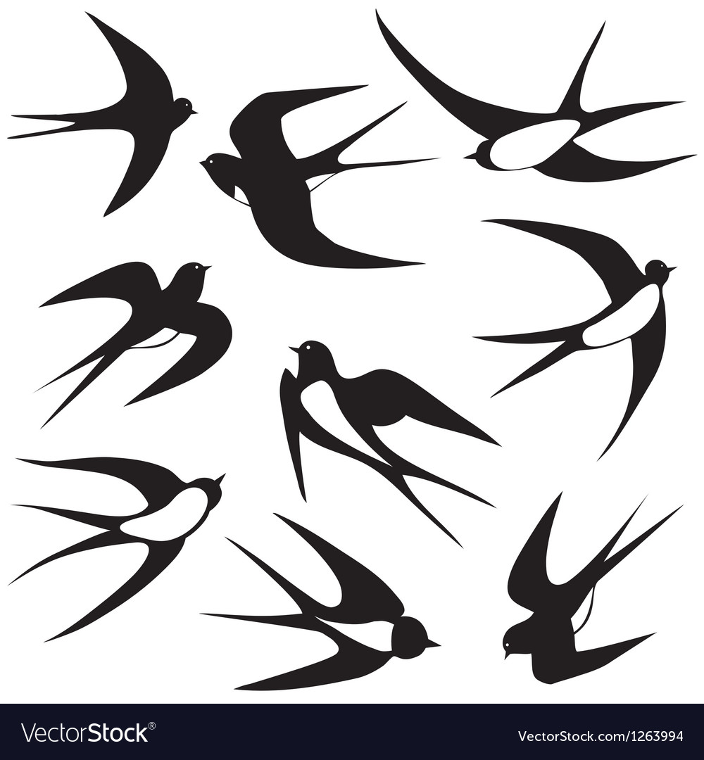 Bird swallow set poses vector | Price: 1 Credit (USD $1)