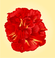 Tropical flower red hibiscus blossom simple flower vector