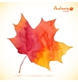 Watercolor red maple leaf vector