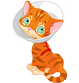 Sick cute kitten vector