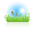 Green grass ith dandelion on white background vector