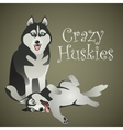 Two funny crazy huskies vector