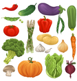 Collection of isolated vegetables vector