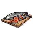 Raw salmon vector