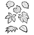 Hand-drawn leaves vector