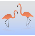 Two flamingos on the water eps10 vector