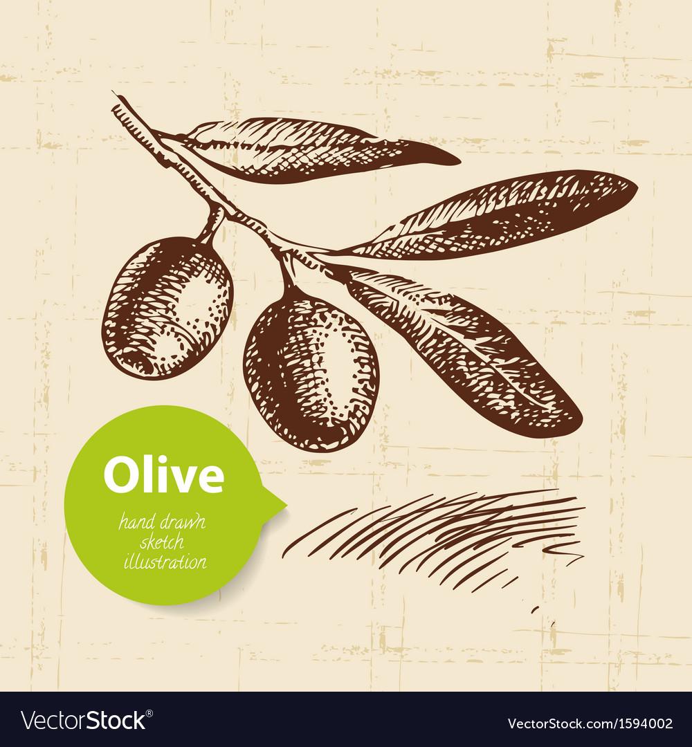 Hand drawn olive vintage background vector | Price: 1 Credit (USD $1)