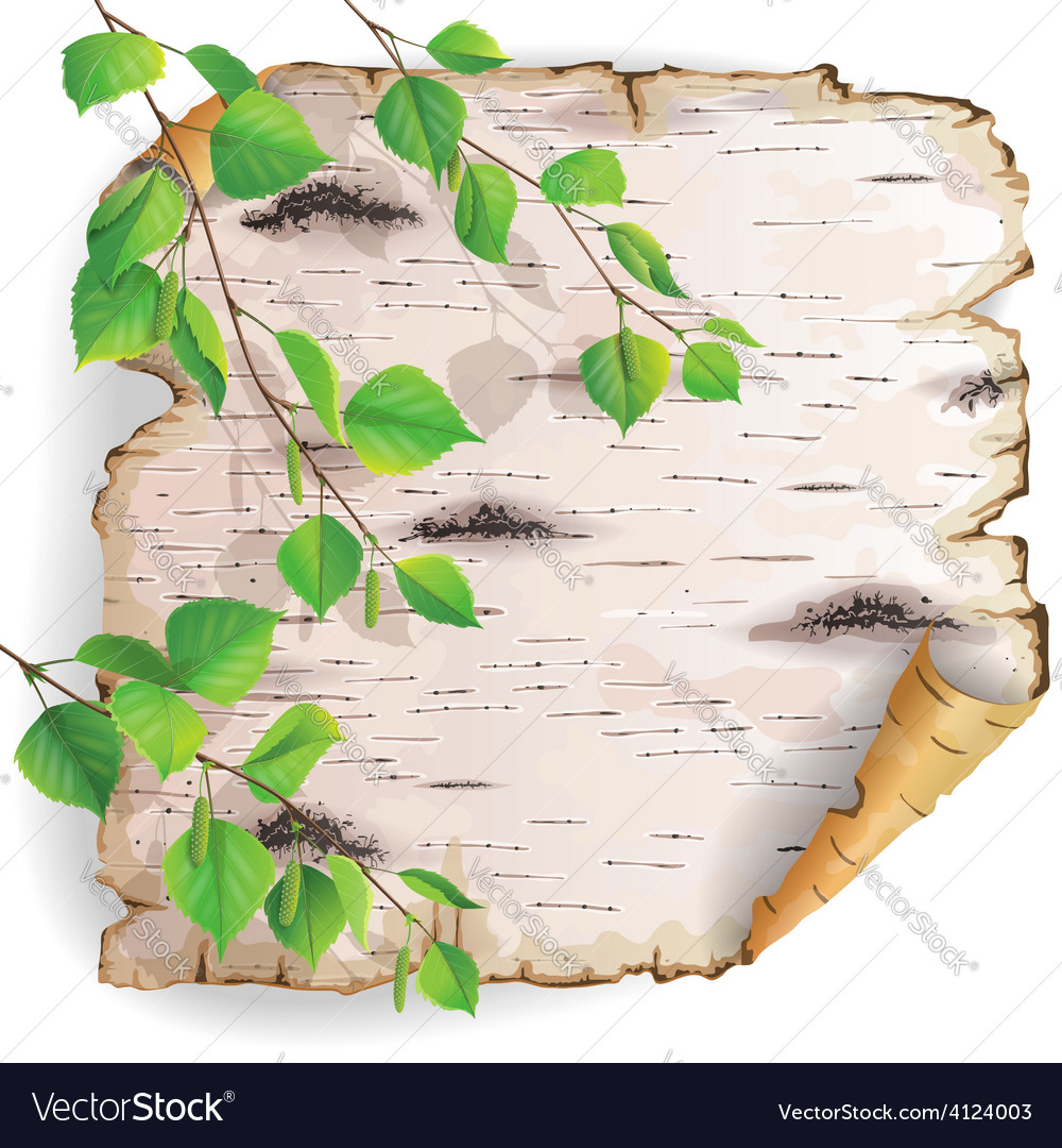 Birch bark and leaves vector | Price: 3 Credit (USD $3)