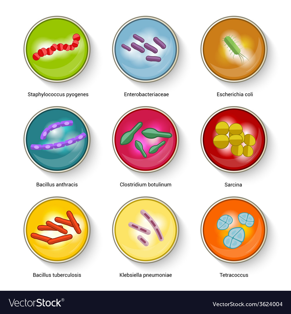 Bacteria icons set vector | Price: 1 Credit (USD $1)
