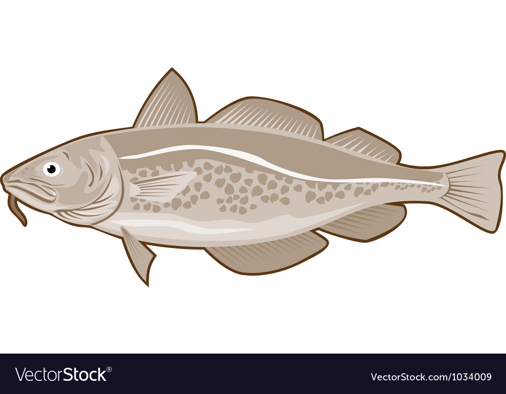 Atlantic codfish retro vector | Price: 1 Credit (USD $1)