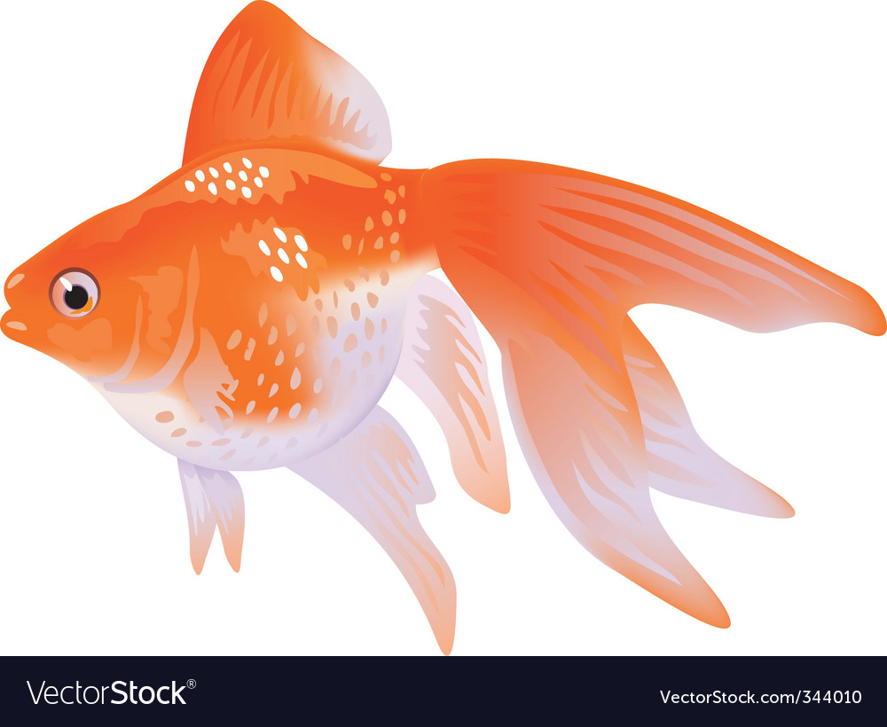 Goldfish veil tail vector | Price: 1 Credit (USD $1)