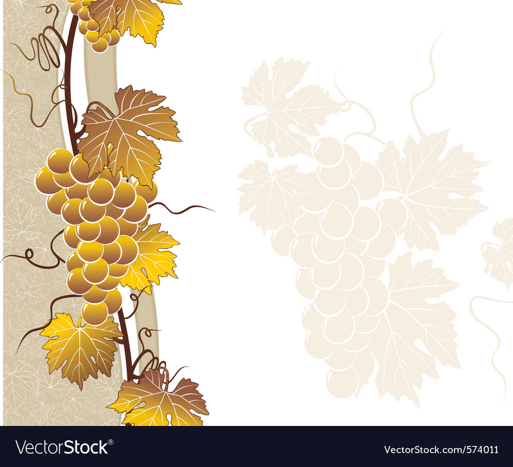 Vine golden frame with templat vector | Price: 1 Credit (USD $1)