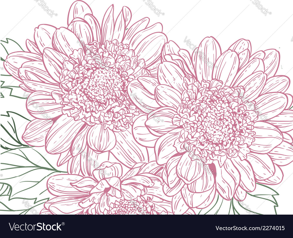 Chrysanthemum background vector | Price: 1 Credit (USD $1)