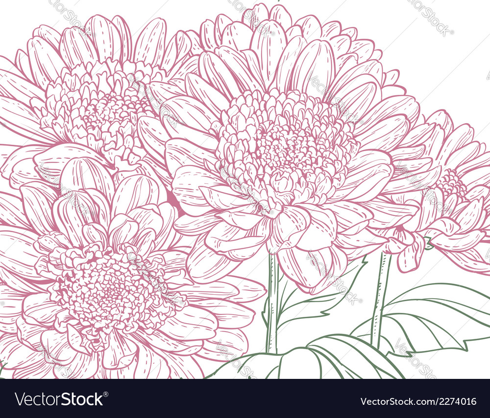 Line pink chrysanthemum background vector | Price: 1 Credit (USD $1)