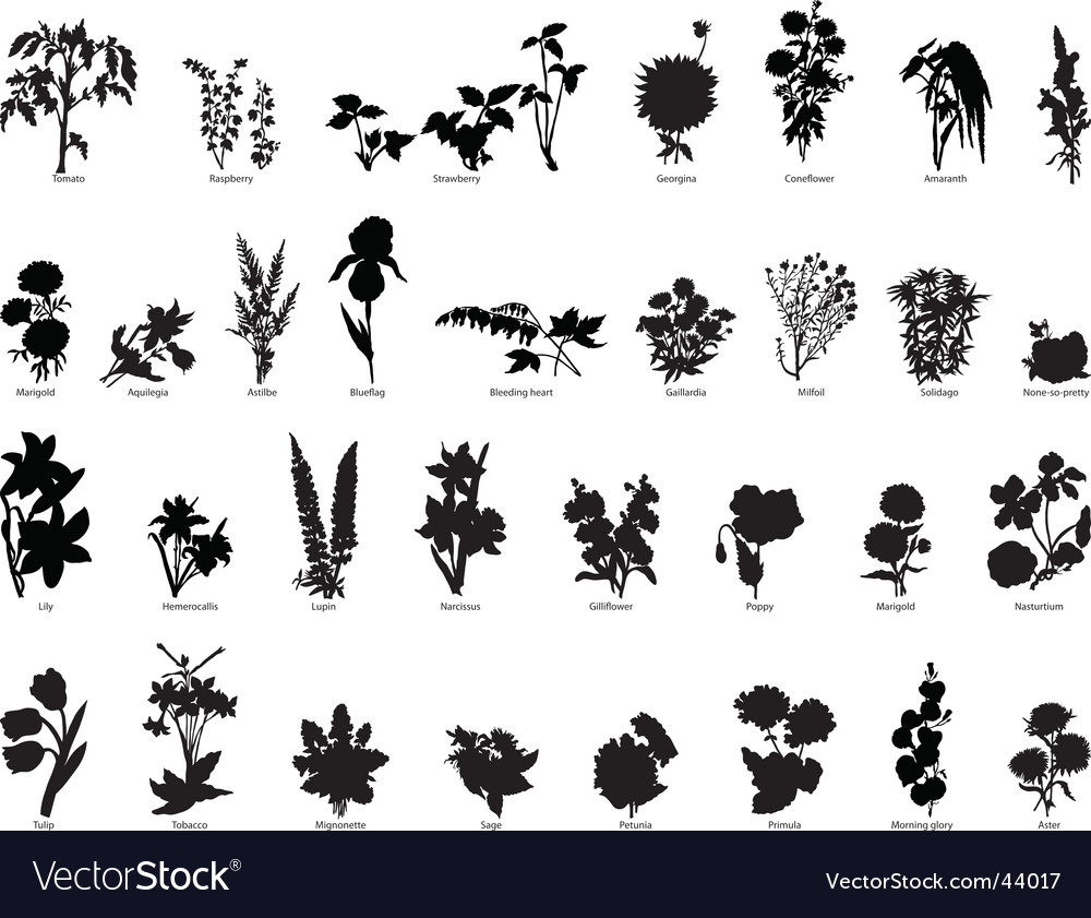Plants collection vector | Price: 1 Credit (USD $1)