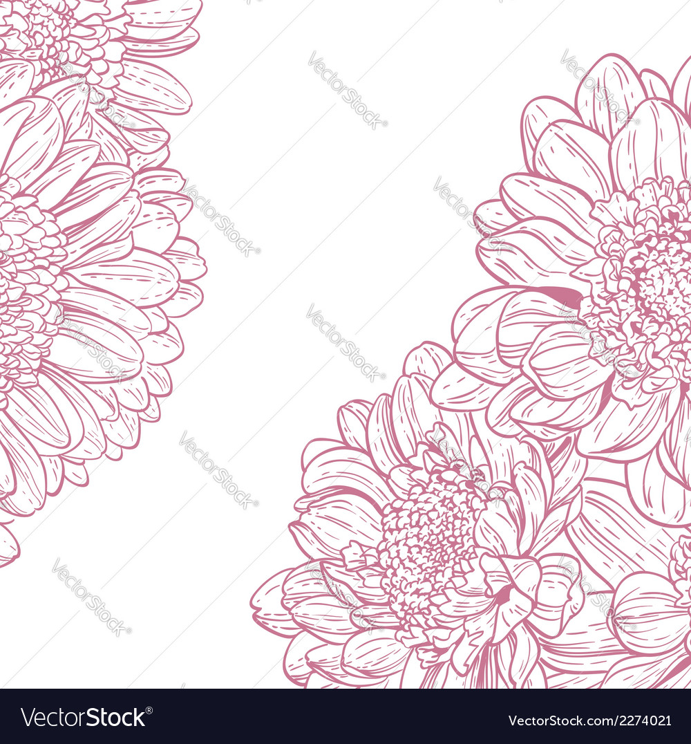 Line drawings pink chrysanthemum vector | Price: 1 Credit (USD $1)