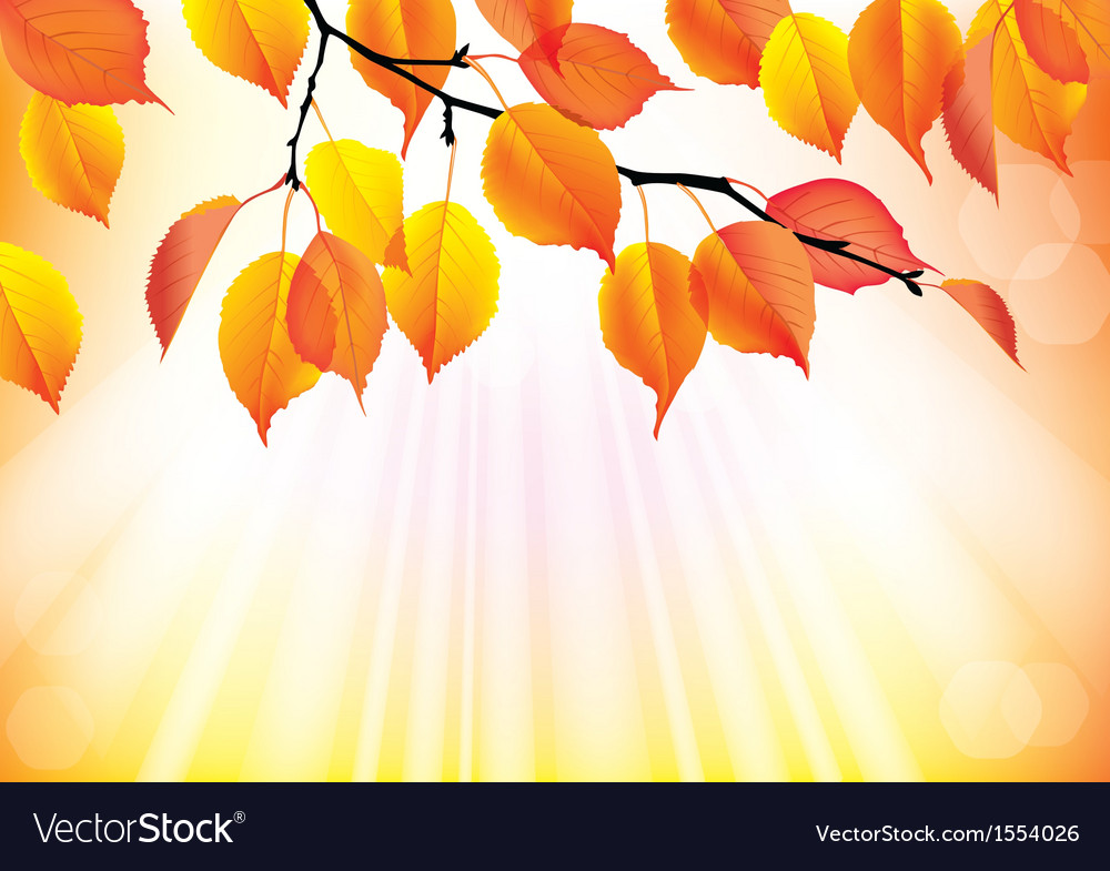 Autumn branch with yellow leaves background vector | Price: 1 Credit (USD $1)