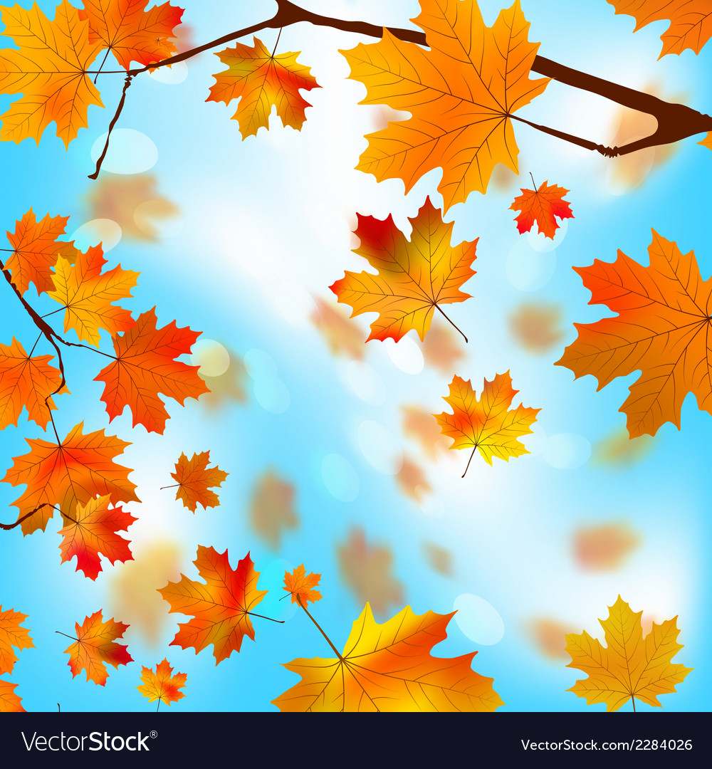 Autumn tree maple leaves against the blue eps 8 vector | Price: 1 Credit (USD $1)