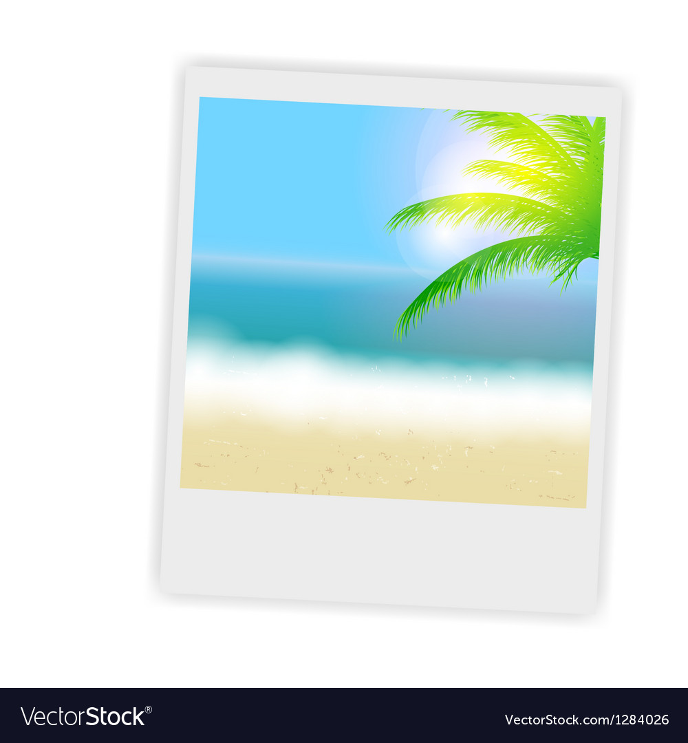 Beautiful summer background with instant photos vector | Price: 1 Credit (USD $1)