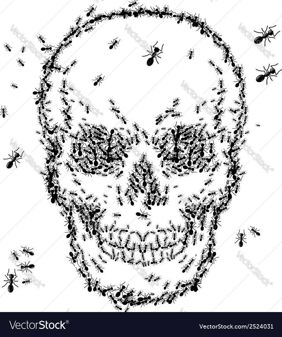 Skull sketch design with ant isolate on white vector | Price: 1 Credit (USD $1)
