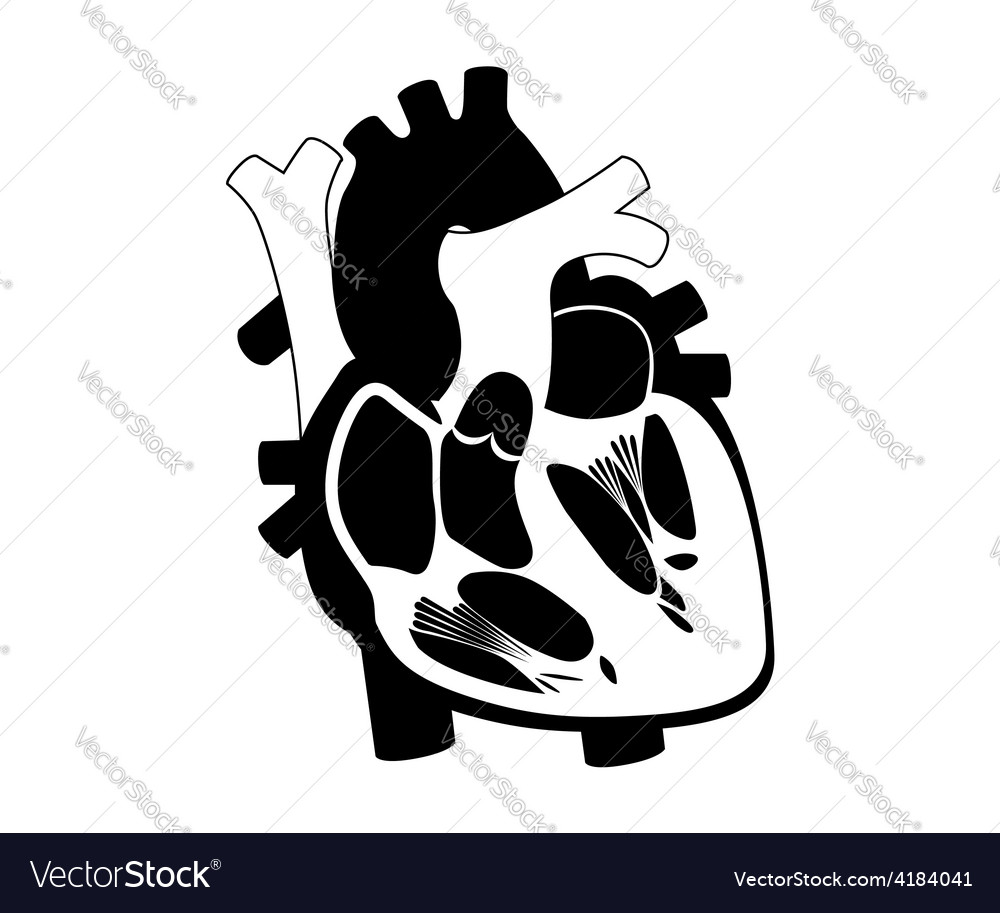 Function and definition human heart silhouette vector | Price: 1 Credit (USD $1)