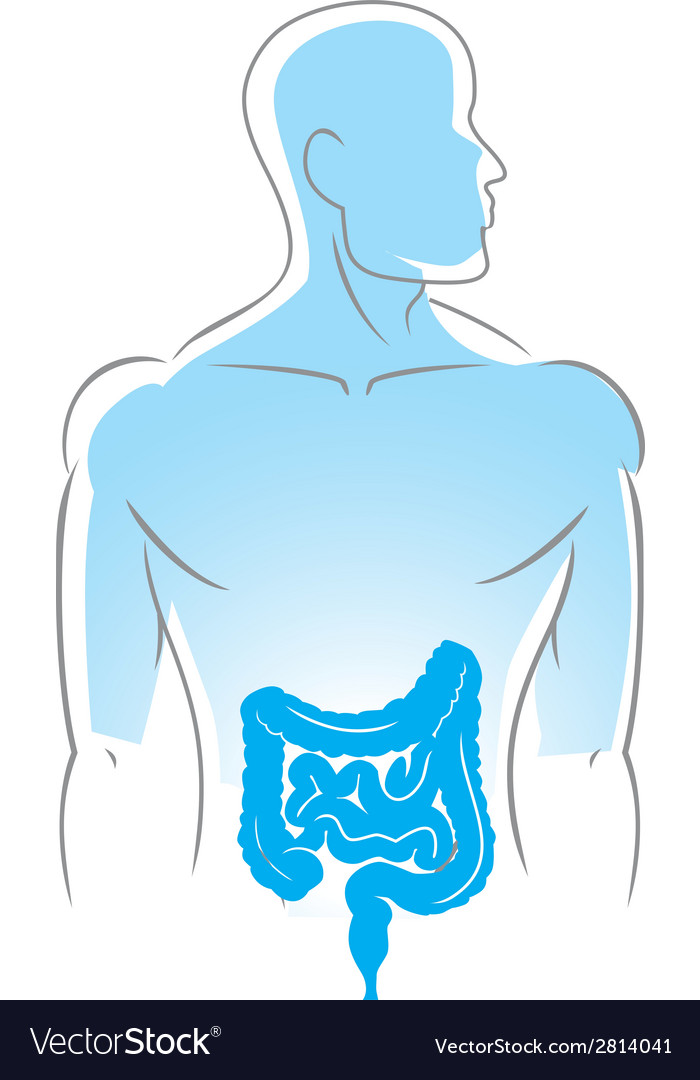Internal organs intestines vector | Price: 1 Credit (USD $1)