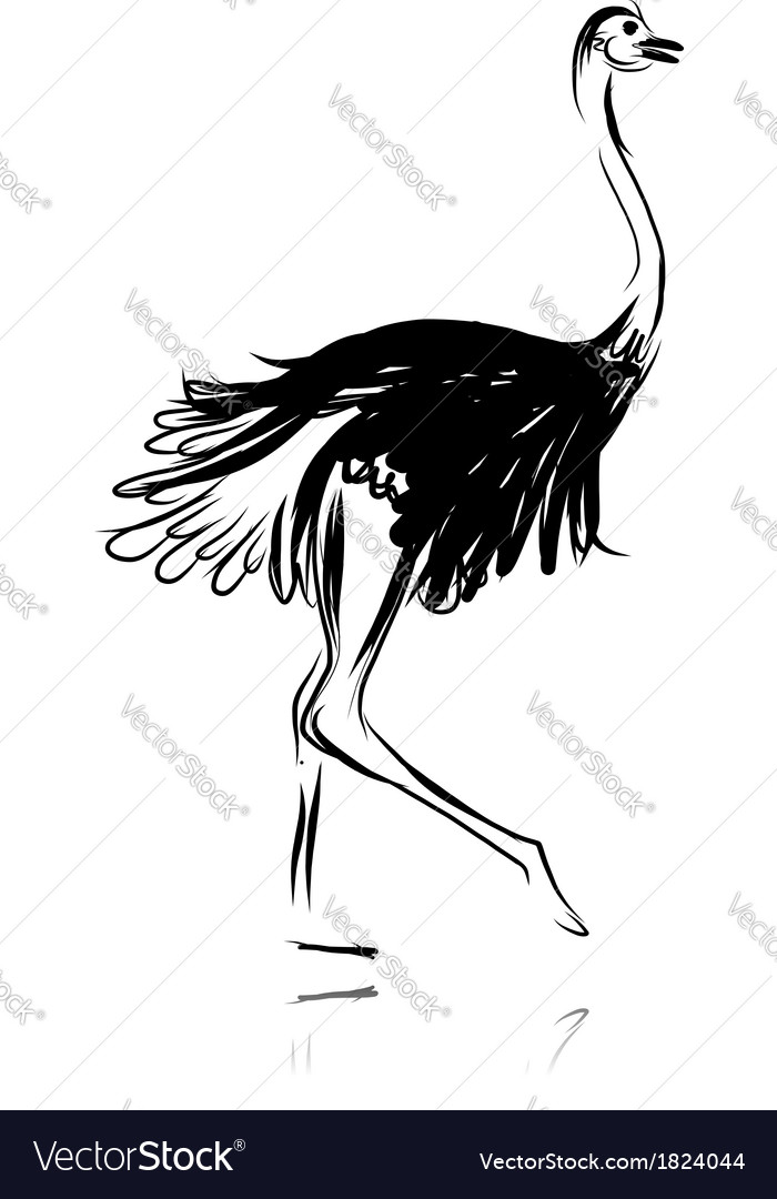 Ostrich sketch black for your design vector | Price: 1 Credit (USD $1)