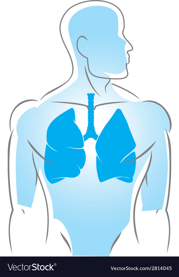 Internal organs lungs vector | Price: 1 Credit (USD $1)