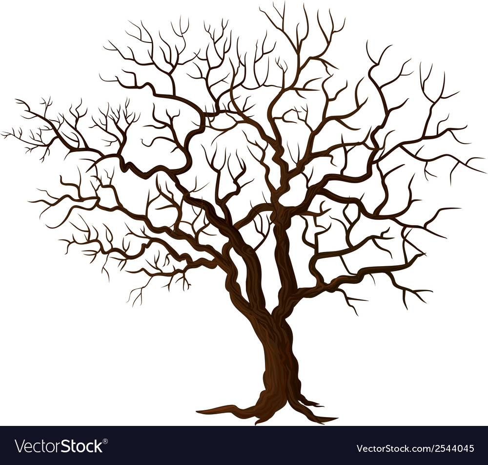 Tree without leaves isolated on white vector | Price: 1 Credit (USD $1)