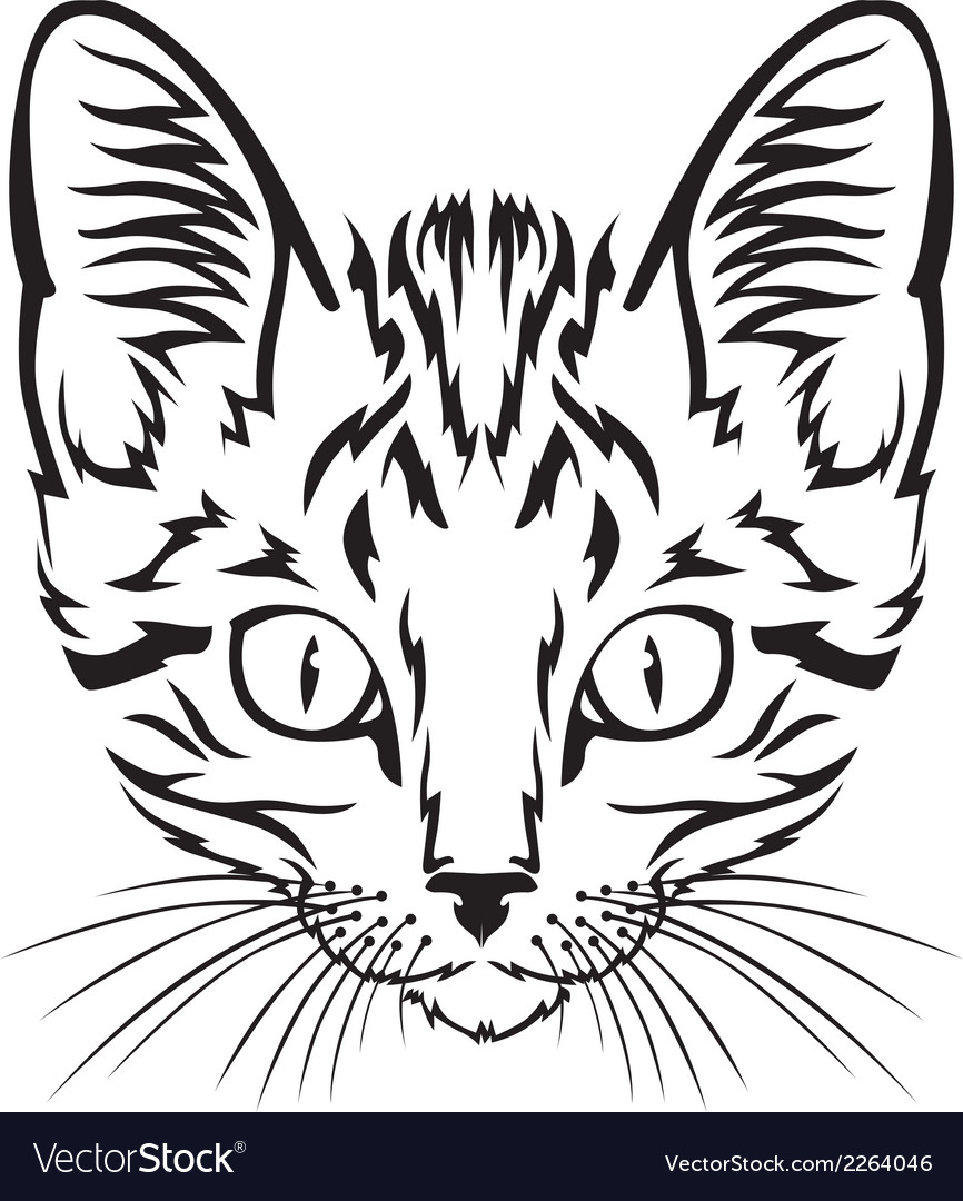 Kitten muzzle vector | Price: 1 Credit (USD $1)