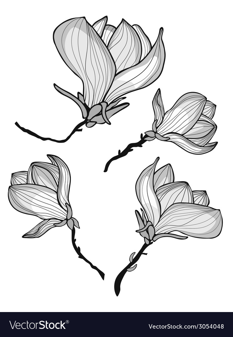 Beautiful magnolia flowers vector | Price: 1 Credit (USD $1)