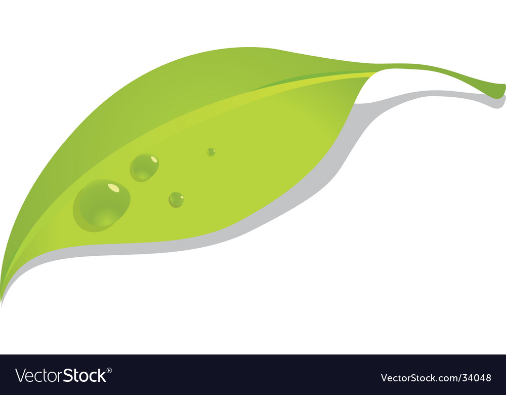 Green leaf with dew vector | Price: 1 Credit (USD $1)