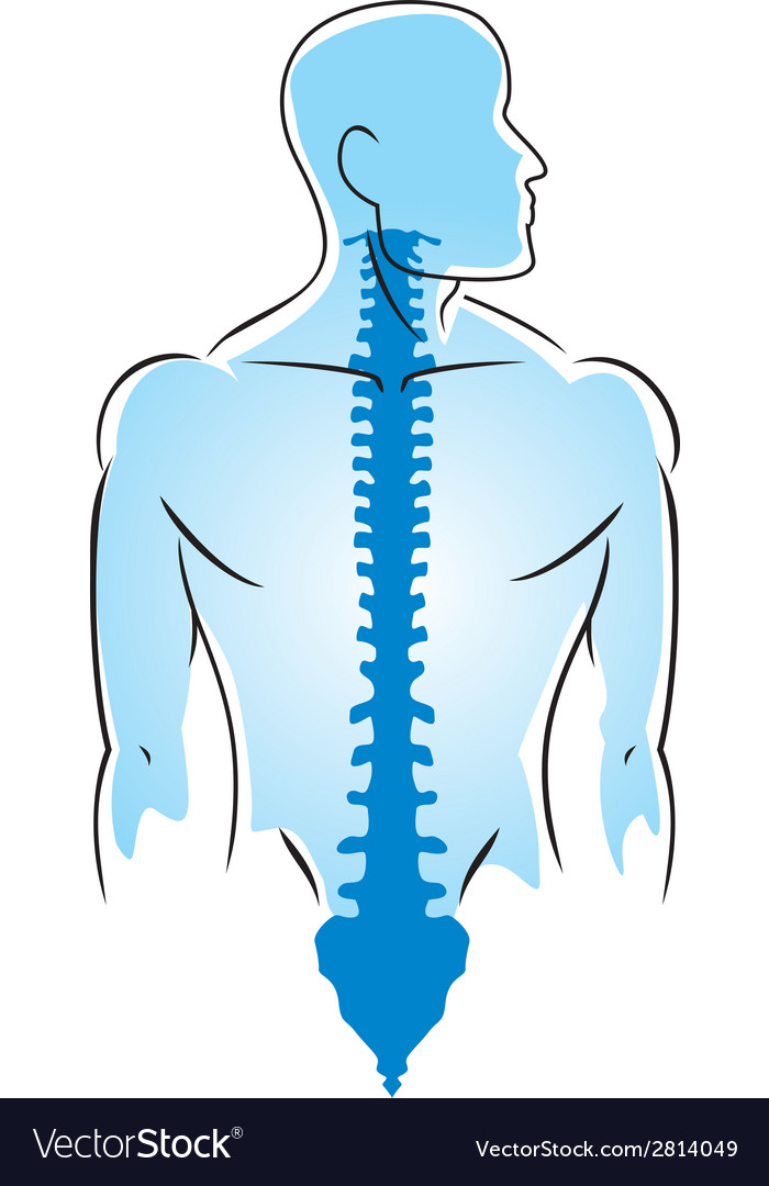 Anatomy of human spine vector | Price: 1 Credit (USD $1)