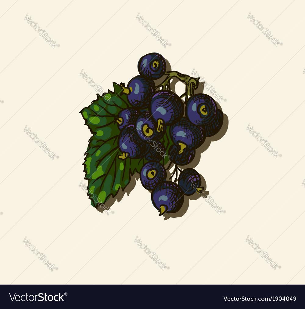 Black currant sketch vector   Price: 1 Credit (USD $1)