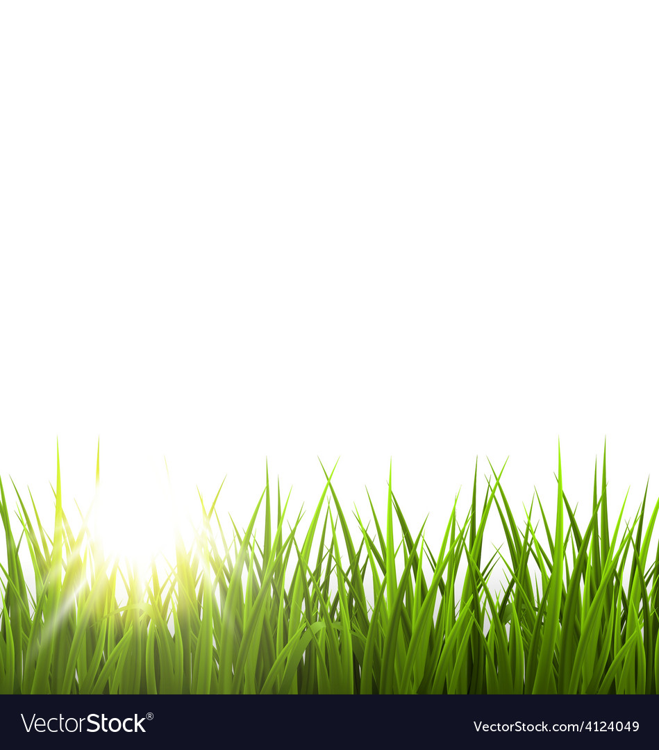 Green grass lawn with sunrise on white floral vector | Price: 1 Credit (USD $1)