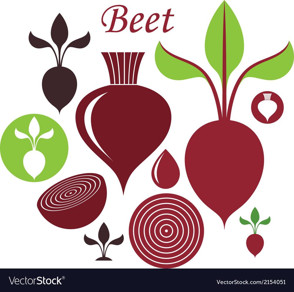 Beet vector | Price: 1 Credit (USD $1)