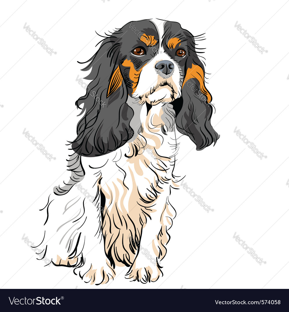 Cavalier king charles spaniel vector | Price: 3 Credit (USD $3)