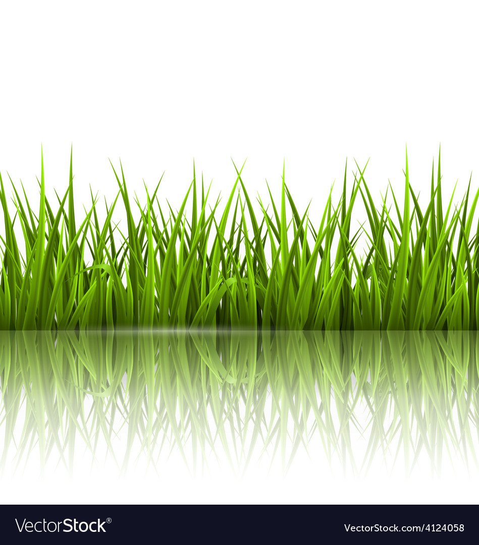 Green grass lawn with reflection on white floral vector | Price: 1 Credit (USD $1)