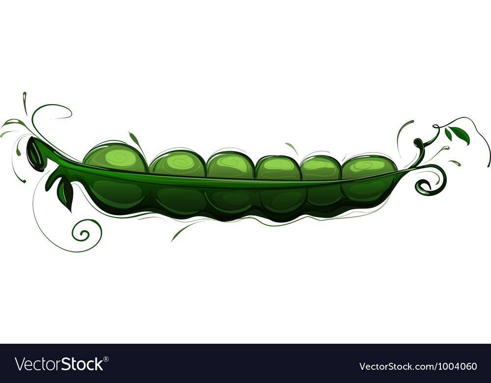 Pea pod vector | Price: 1 Credit (USD $1)