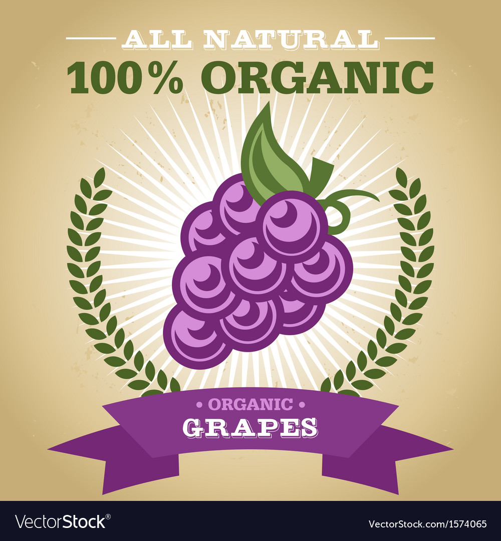 Organic grapes vector | Price: 1 Credit (USD $1)