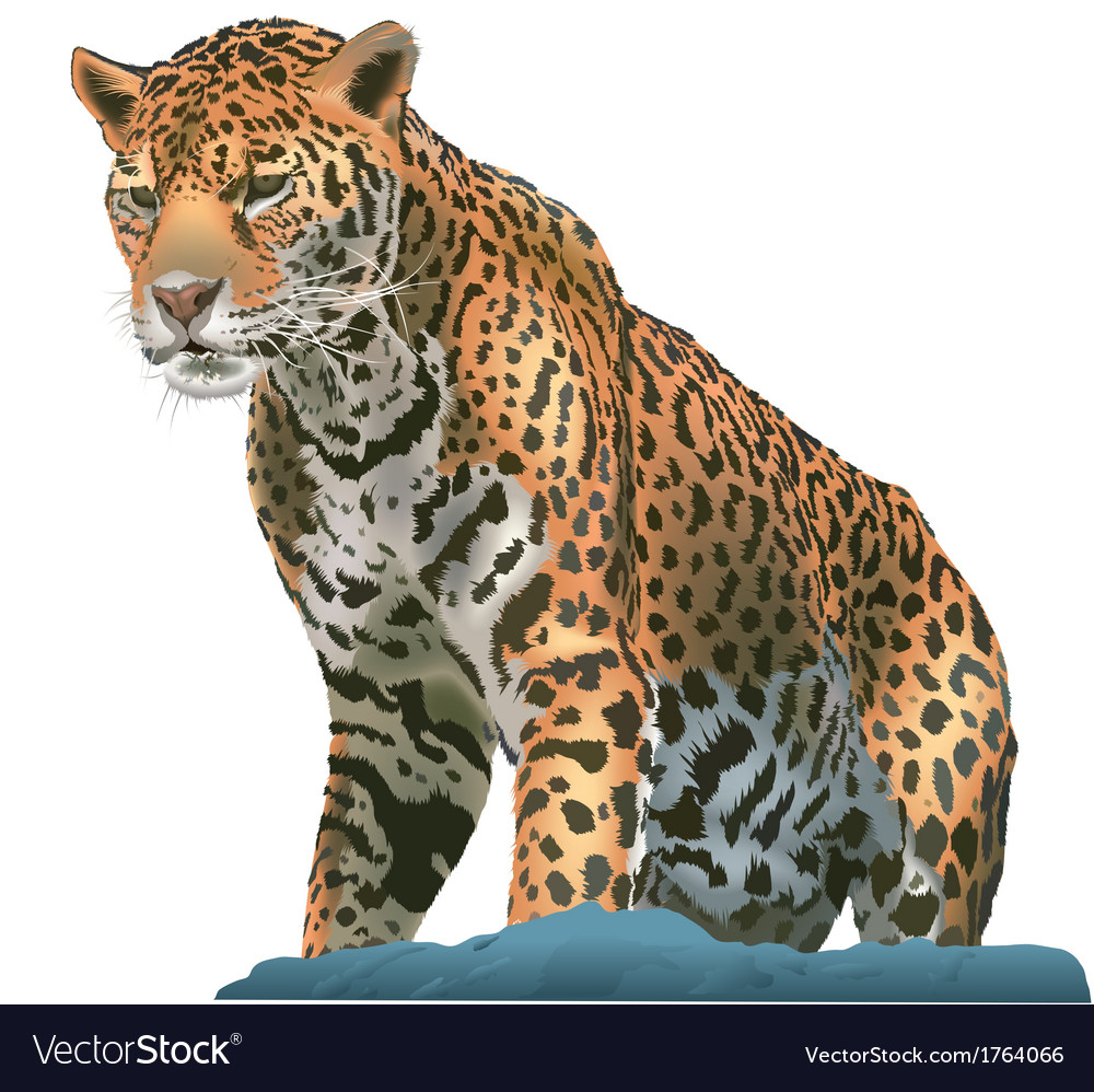 Leopard vector | Price: 3 Credit (USD $3)