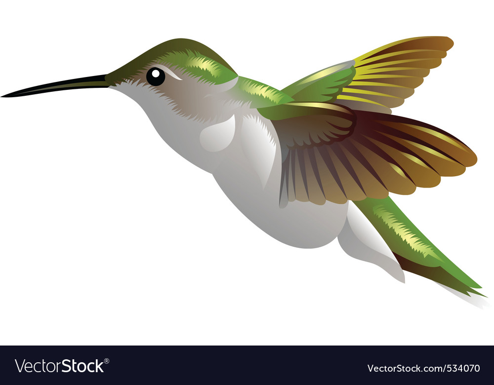 Humming bird vector | Price: 1 Credit (USD $1)