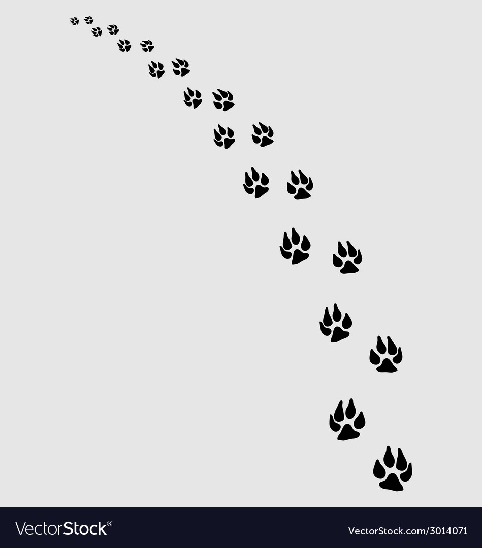 Dogs footprints 2 vector | Price: 1 Credit (USD $1)