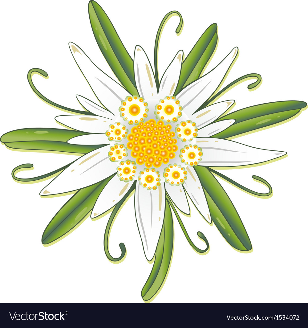 Floral element ornament vector | Price: 1 Credit (USD $1)