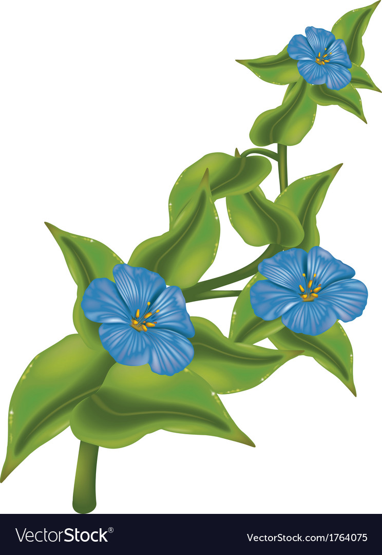 Plant with blue flowers vector | Price: 1 Credit (USD $1)