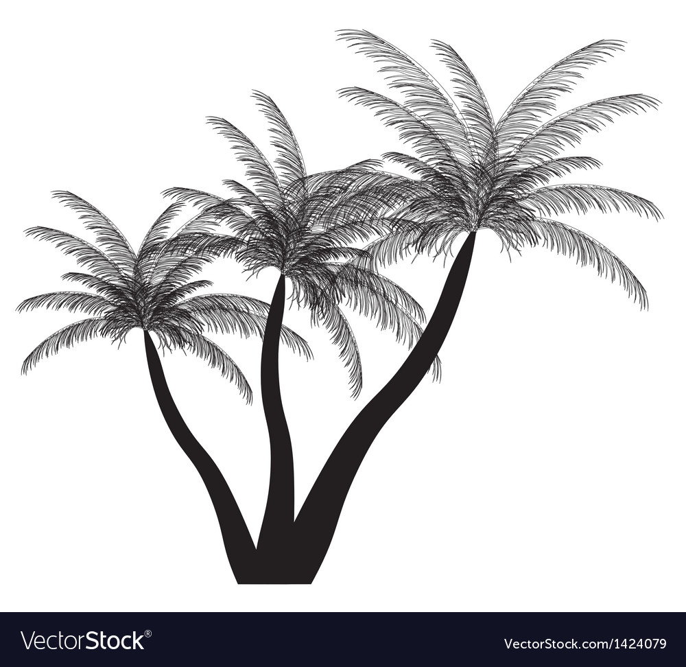 Palm silhouette  eps 10 vector | Price: 1 Credit (USD $1)