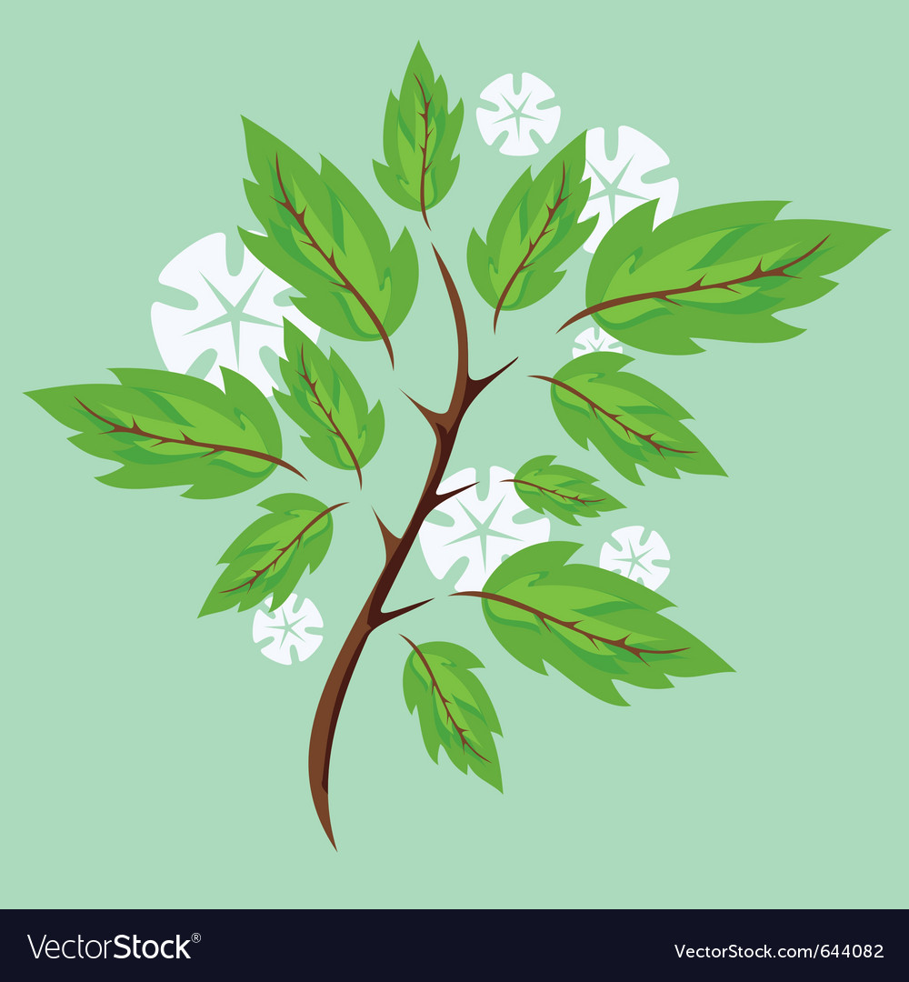 Spring branches vector   Price: 1 Credit (USD $1)