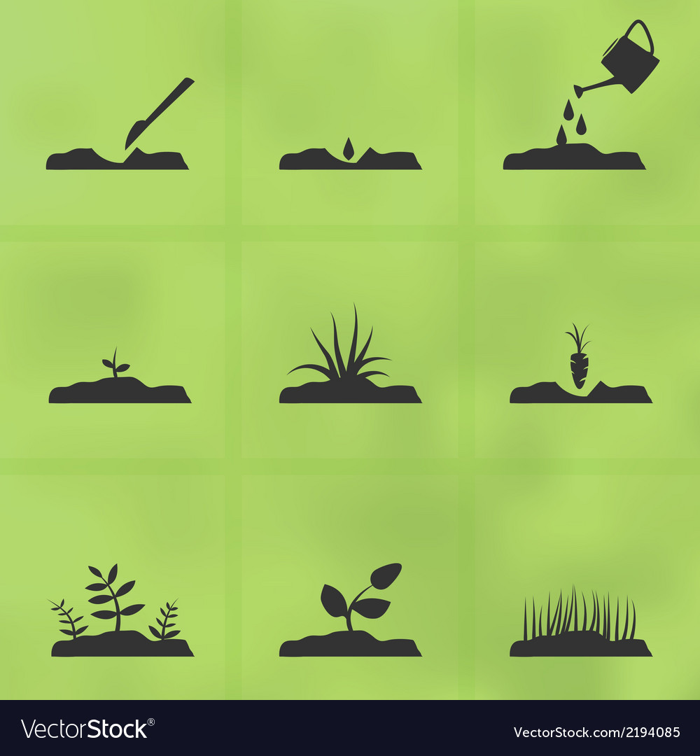 Grow a plant vector | Price: 1 Credit (USD $1)